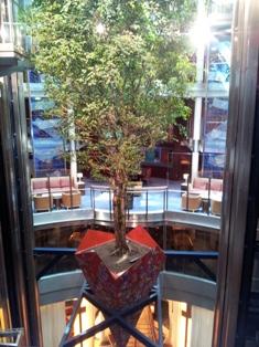 Tree in Atrium